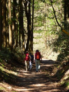 Forest trail from Magome to Tsumago.