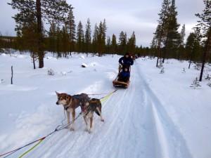 Dog sled rest break.