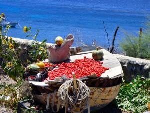Sun-drying tomatoes.